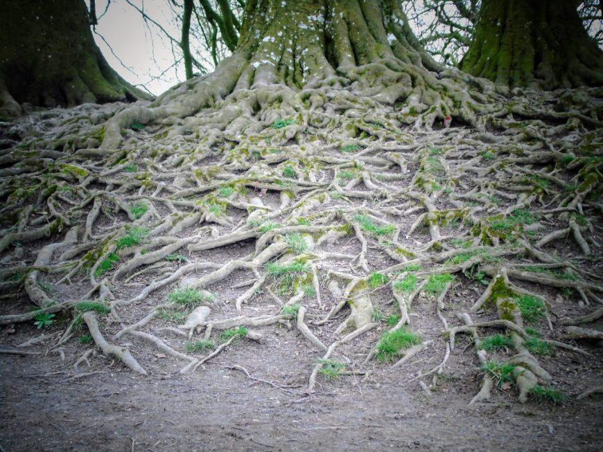 Avebury Tree