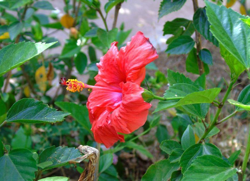 Flowers in Eleouthkia Park, Cyprus