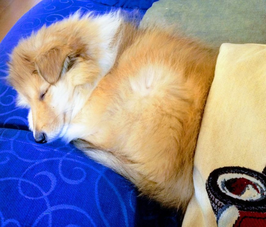 Dog Friendly Accommodation