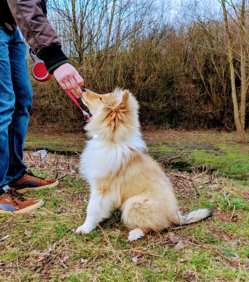 National Trust Dog Friendly Places: Dogs are welcome on leads in the shop and throughout the gorge at Cheddar Gorge in Somerset.
