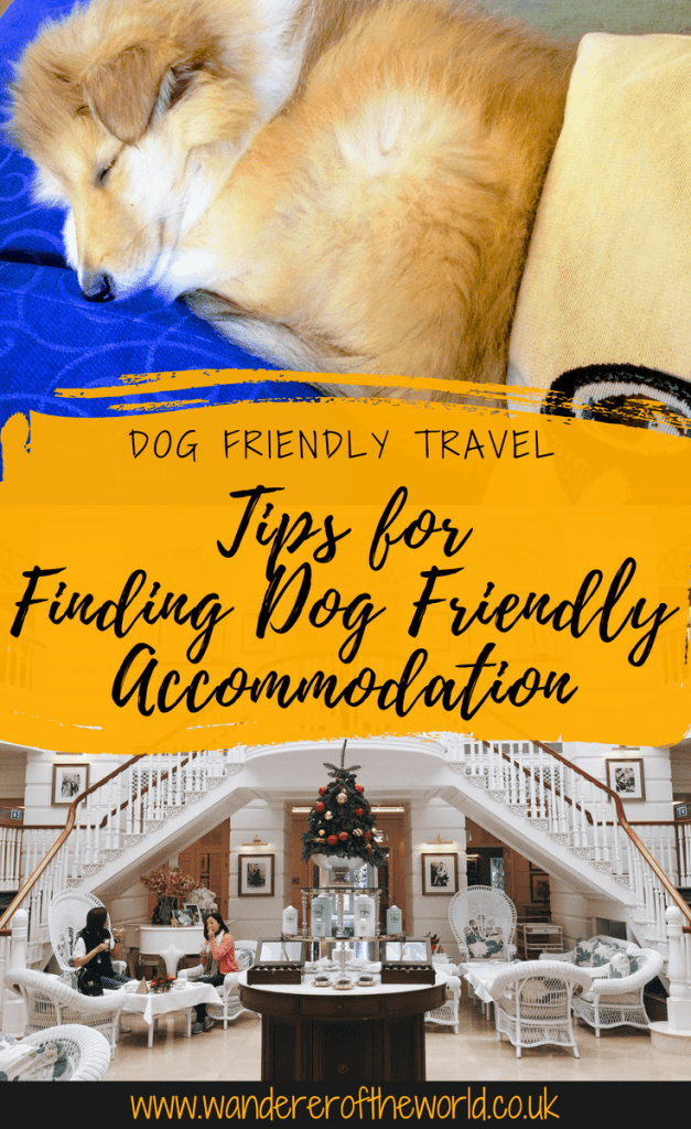 Tips & Advice for Finding the Best Dog Friendly Accommodation