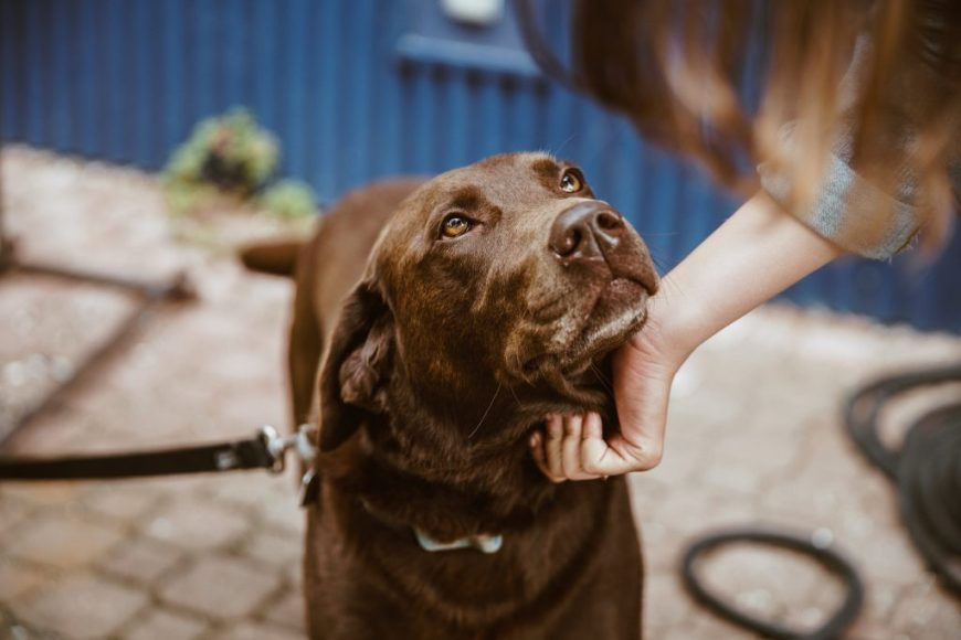 National Trust Dog Friendly Places: Dogs are welcome in the park and at the Farmyard cafe at Blickling Estate in Norfolk.