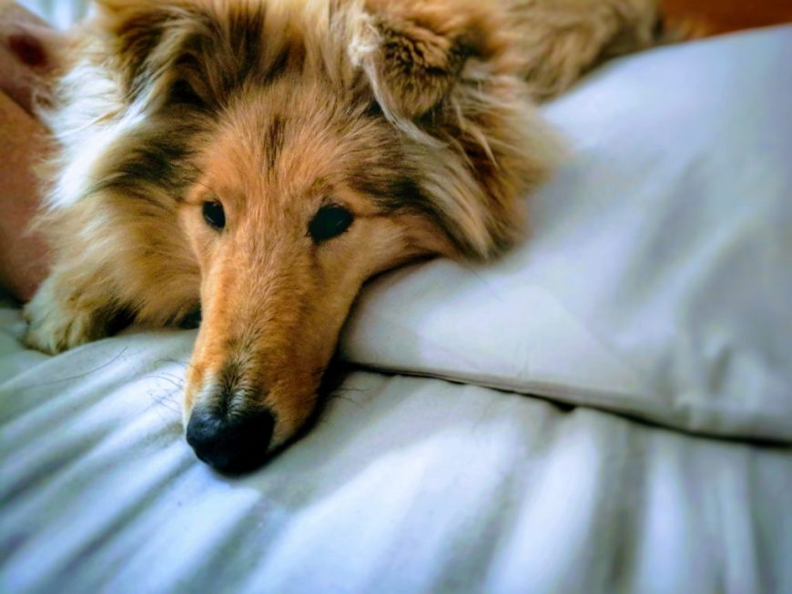 Dog Friendly Places to Stay in Bude, Cornwall
