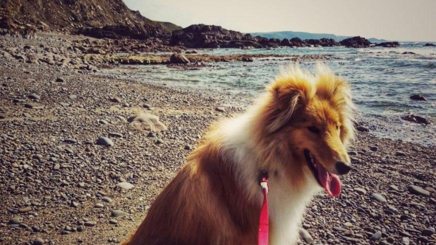 Dog Friendly Upton Beach, Bude