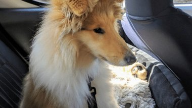 Dog Travel Tips: How to Travel Long Distance With a Dog