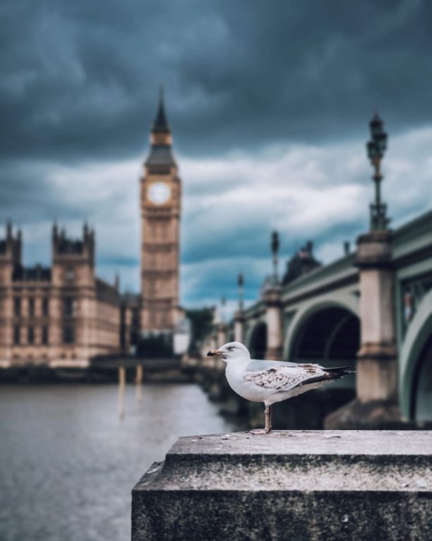 Seagull in London
