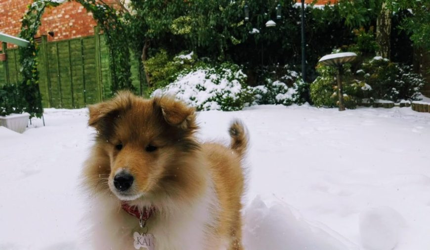 Kai in the snow