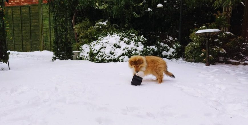 Kai playing in the snow