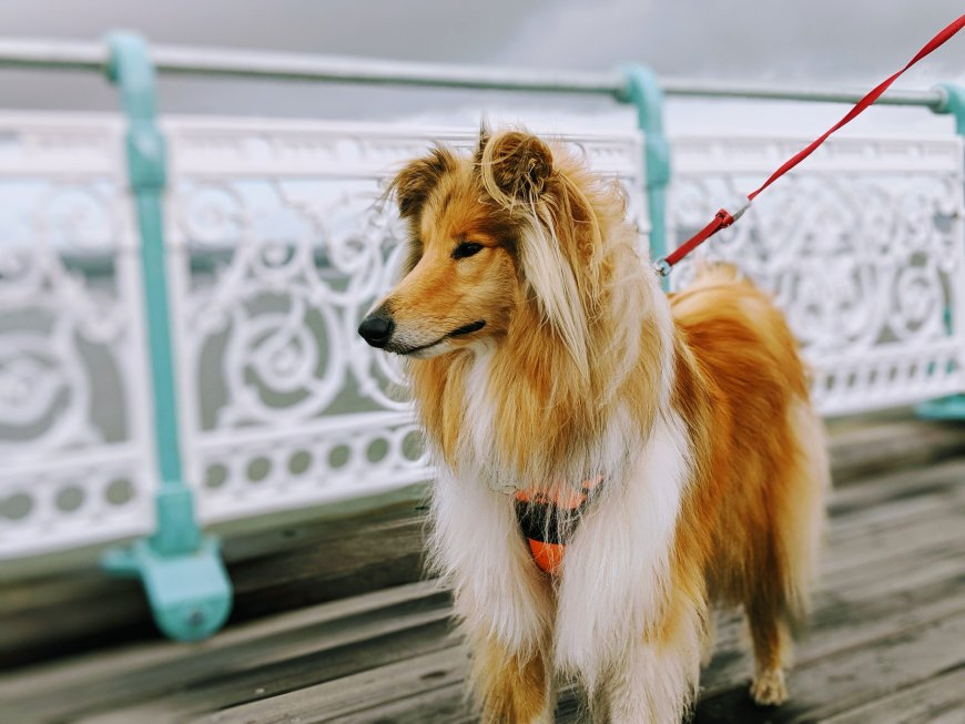 Kai on Mumbles Pier, Gower Peninsula