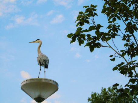 Heron on top of a lamp post in Vondelpark, Amsterdam