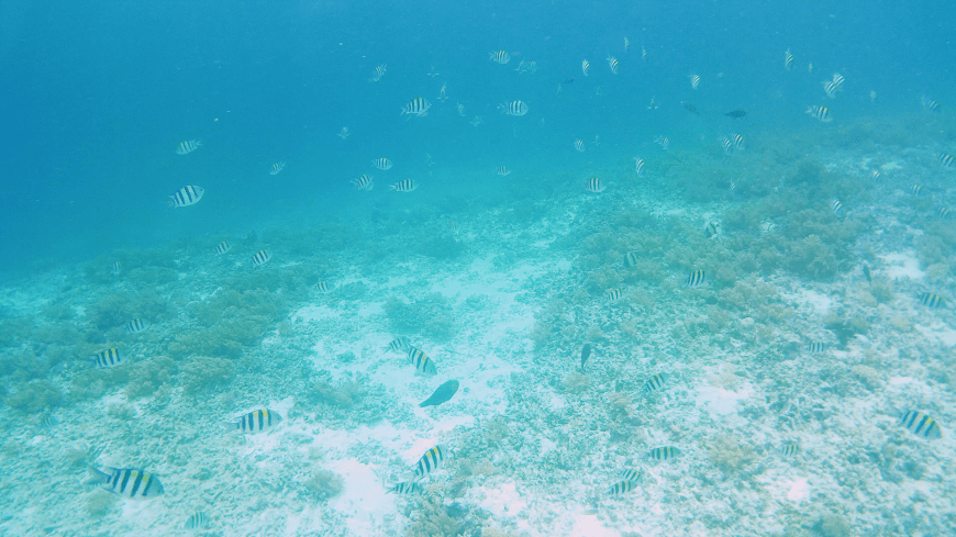 Colourful fish during Gili Meno snorkelling session