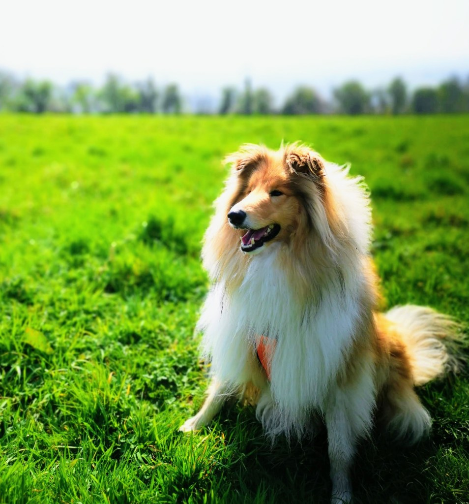 Swineford Dog Walk