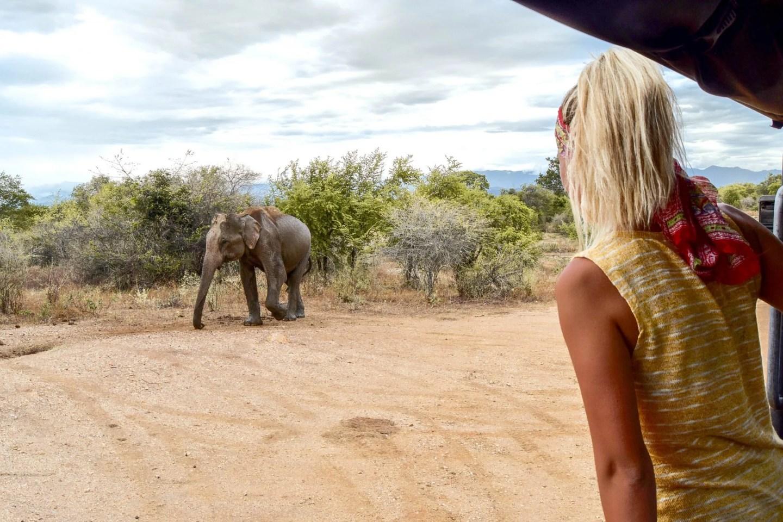 Udawalawe National Park – Best Safari In Sri Lanka