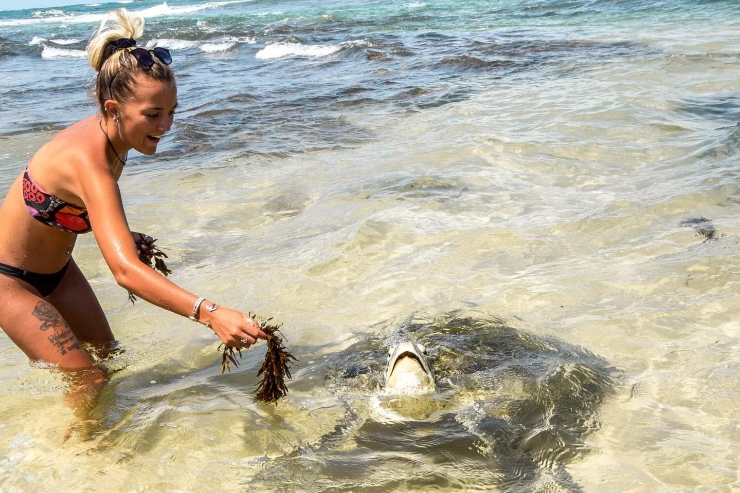 Wild Hikkaduwa Turtles & Where To Find Them