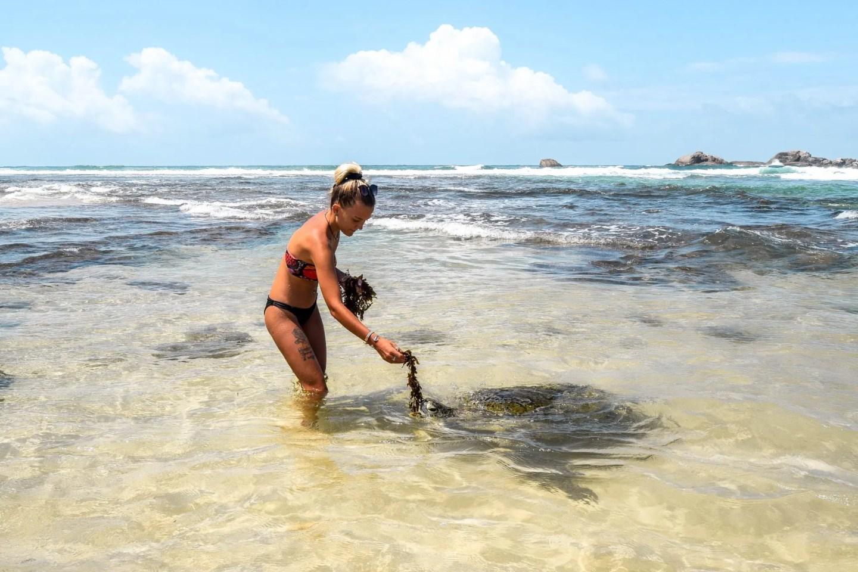 Wanderers & Warriors - Charlie & Lauren UK Travel Couple - Wild Hikkaduwa Turtles Sri Lanka