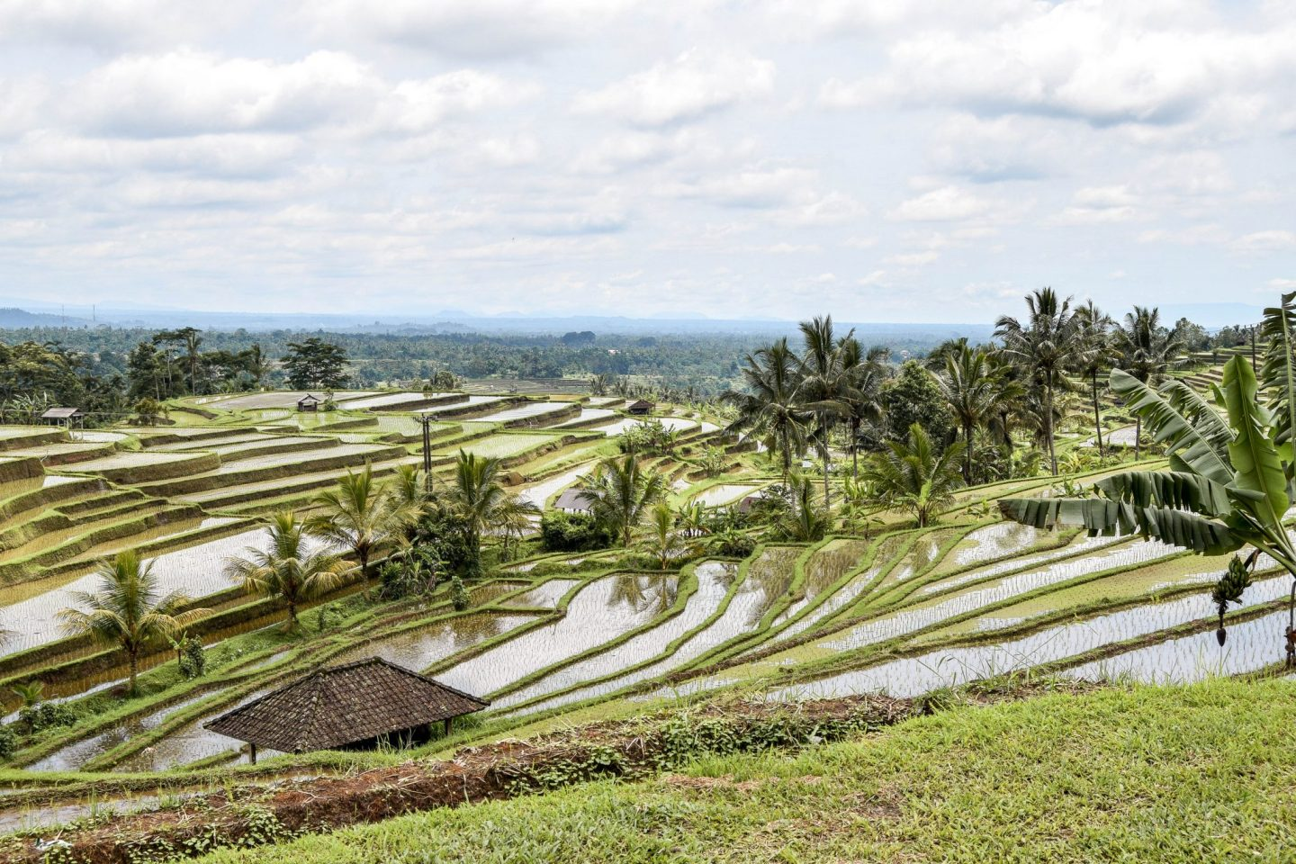 Wanderers & Warriors - Charlie & Lauren UK Travel Couple - Jatiluwih Rice Terrace – All You Need To Know - Jatiluwih Rice Terrace Entrance Fee - Jatiluwih Rice Fields