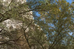 A Glimpse of the Montezuma's Castle Wall through the Sycamore Trees on the Path - photo by Győző Egyed