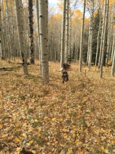 Fun to Run in an Aspen Growth