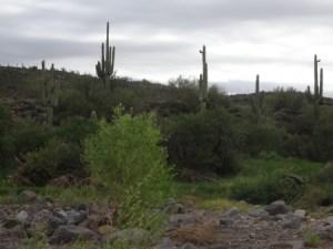 Desert Trail in Phoenix in Winter