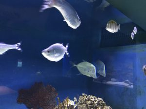 Aquatic Life at the Arizona-Sonora Desert Museum
