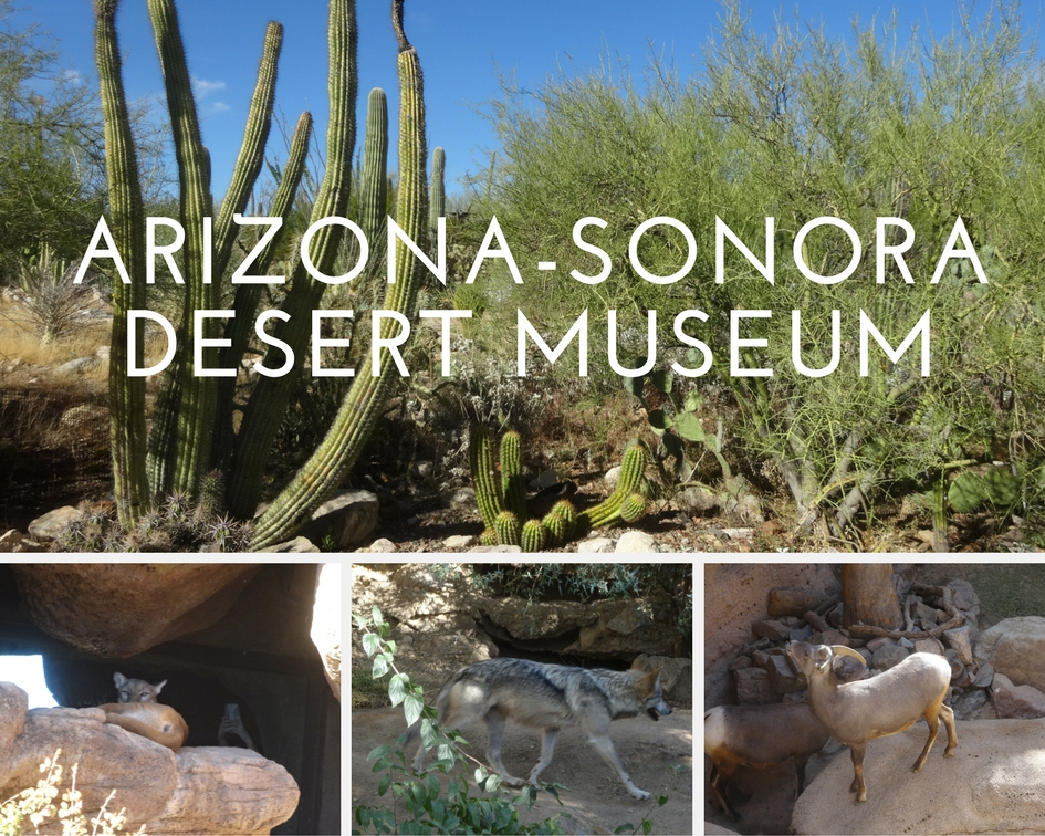 A Visit to the Arizona-Sonora Desert Museum