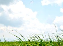 Kites flying at Max Patch