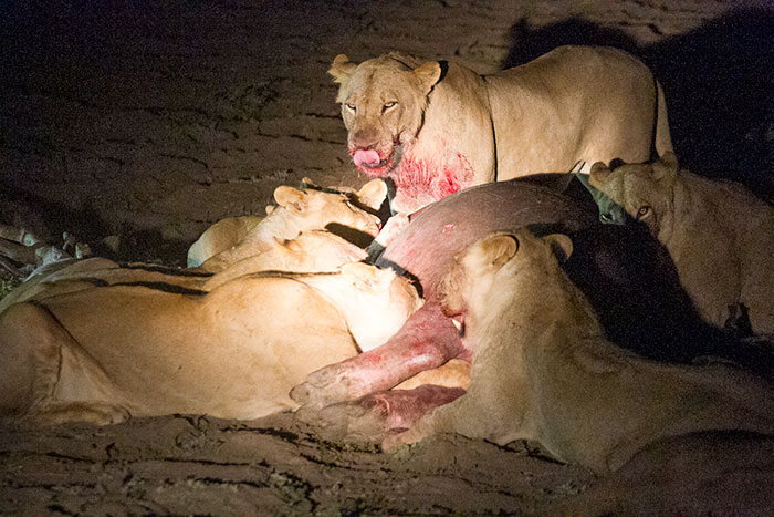 Diner de Lions