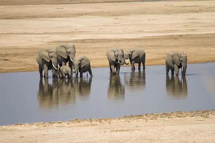Troupeau elephant