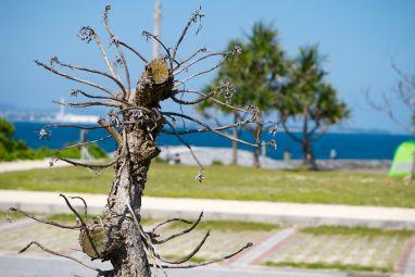 trees at uken beach