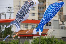 black and blue carp kites