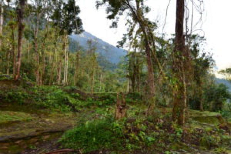 Hiking to Cuidad Perdida