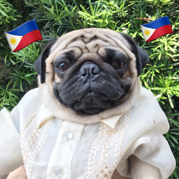 Jamba the Pug also supports the commemoration of Philippine Independence Day. In his barong Tagalog, he looks more respectable than most politicians.