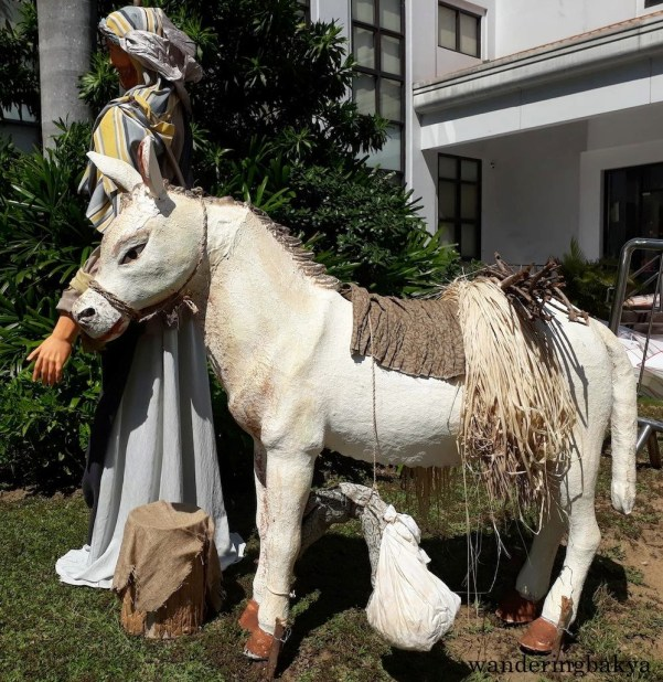 Going back to my favorite part of the Nativity scene, the donkey, who looks better good even in daylight.