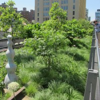 The High Line is Urban Renewal at Its Very Best