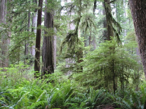 5 Tips to Enhance Your Visit to the Redwoods