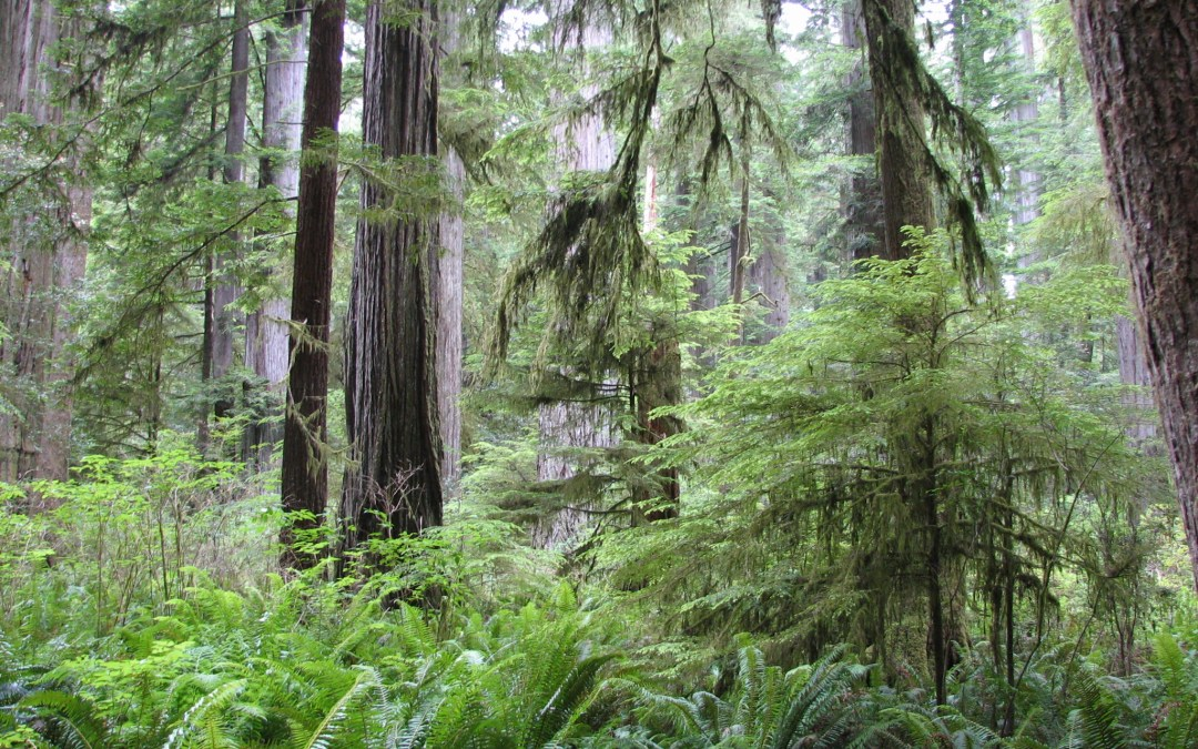 5 Tips to Enhance Your Visit to Redwood National & State Parks