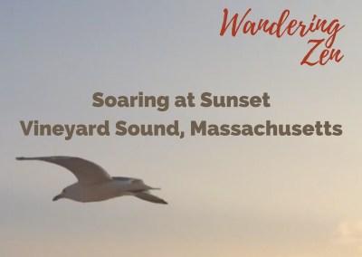 Wandering Zen – Soaring at Sunset. Vineyard Sound, Massachusetts
