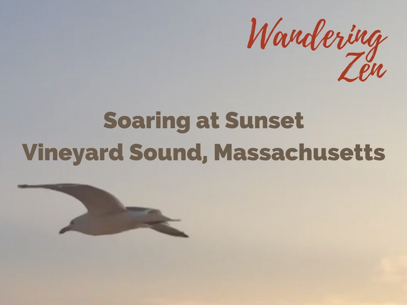 Wandering Zen – Soaring at Sunset. Vineyard Sound, Massachusetts