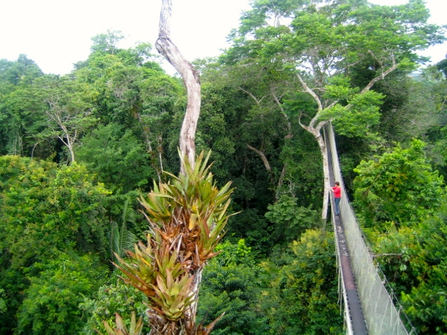 Canopy Walk in the Amazon Rainforest Peru, before my shamanic healing