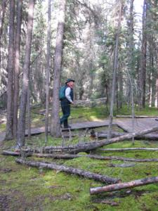 The bogs of northern Saskatchewan a mind boggling experience