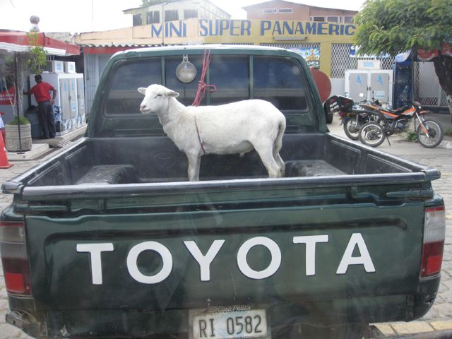 12 ways to tell if you travel too much - truck with goat