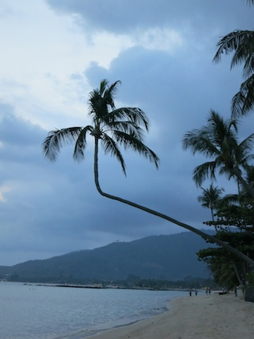 Life lessons learned on the beach in Koh Samui, a twisted palm