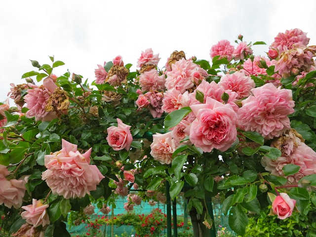 Best time to visit France summer vs winter roses at Giverny