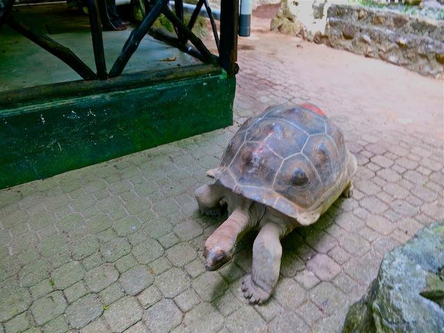 Seychelles islands Moyenne Island tortoises