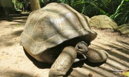 Tortoise habitat on Moyenne Island Indian Ocean Seychelles