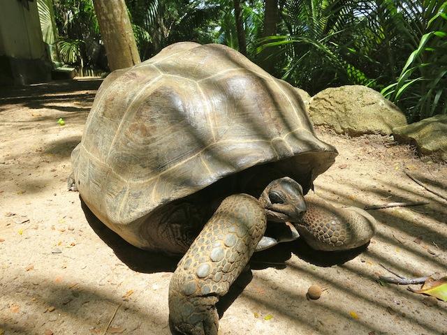 Seychelles islands Moyenne tortoises