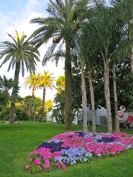 Palm trees in Cannes South of France