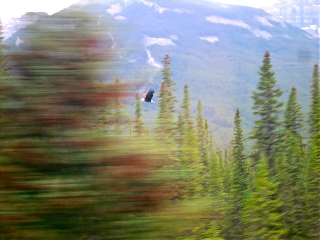 Amazing Rocky Mountaineer wildlife photos
