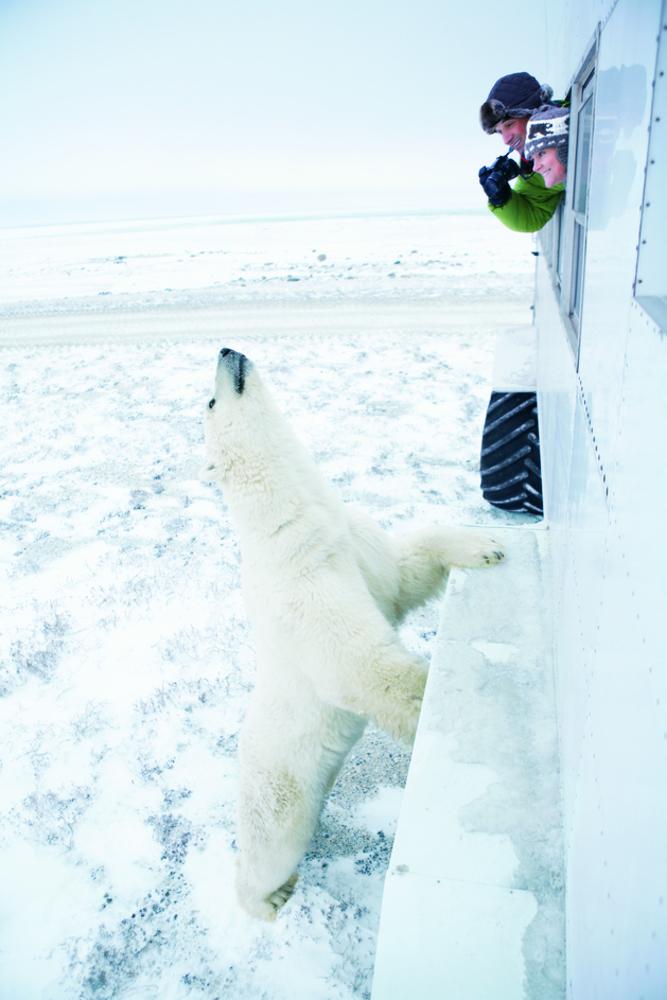 Experience Churchill wild with polar bears