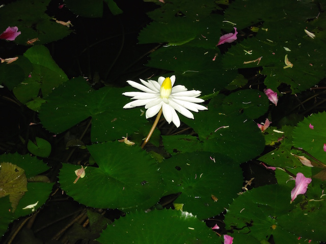 Grand Velas Riviera Maya Spa lotus flower
